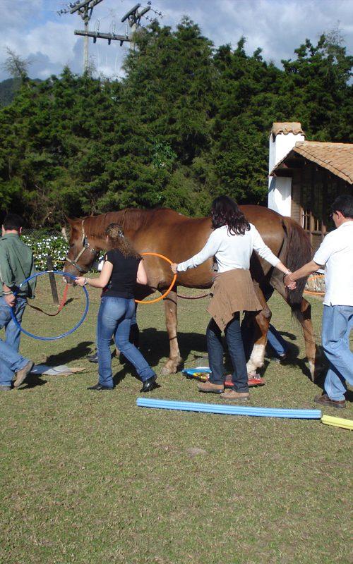 Web-Horse-grupos-F1